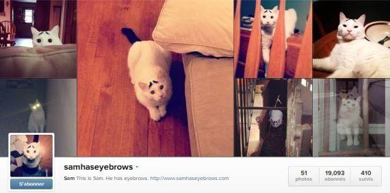PHOTOS. Découvrez Sam, le chat avec des sourcils et nouvelle icone féline du