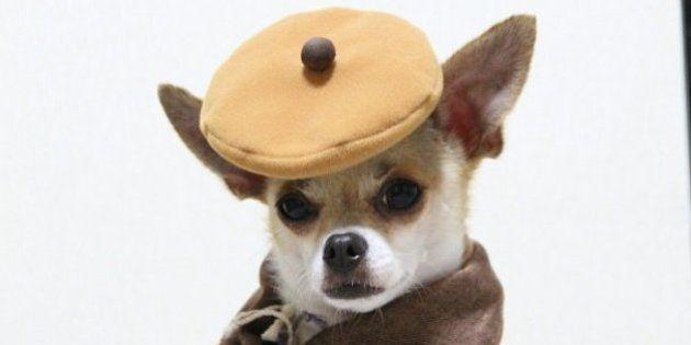 PHOTOS. Vêtements pour chien : découvrez Montjiro, ce chien qui a une garde-robe de