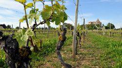 Risques de blanchiment d'argent dans les vignobles