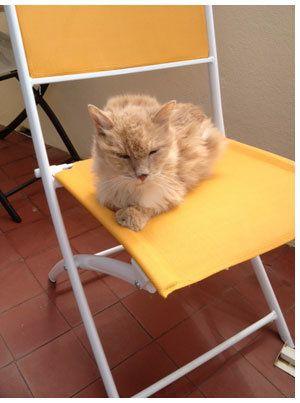 Voltaire: chat abandonné, chat