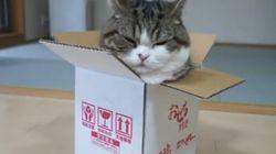 Les LOLcats à l'honneur pour la Journée internationale du