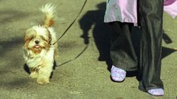 Avoir un chien, la dernière mode clandestine en