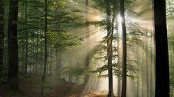 Planter des arbres serait la solution la plus efficace pour lutter contre le réchauffement