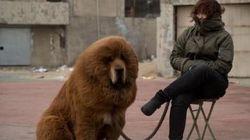 Un zoo chinois ferme ses portes après avoir fait passer un chien pour un
