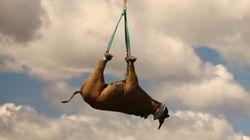 Les rhinocéros volants de la