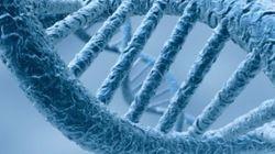 Un livre entier enregistré dans de l'ADN