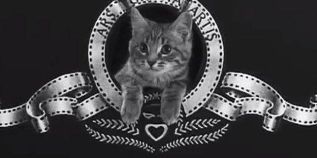 VIDÉOS. Festival mondial des vidéos de LOLcat: découvrez le vainqueur et toutes les vidéos du