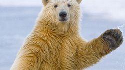 Un ours se prend pour John