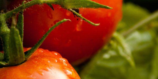 Manger bio ne serait pas meilleur pour la santé selon une étude
