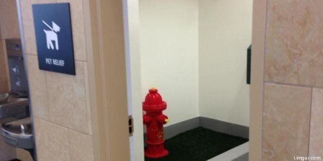 Des toilettes publiques pour chien à l'aéroport de San