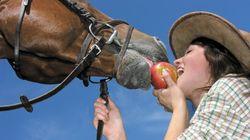 Viande de cheval : la revanche des