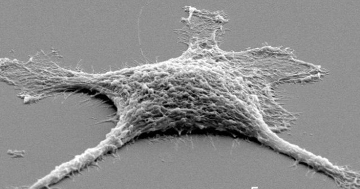 Une cellule zombie mise au point par des chercheurs