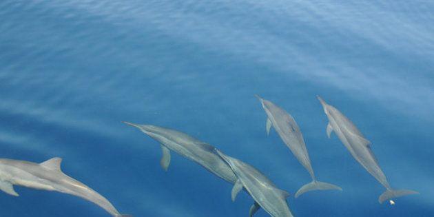 Les dauphins s'appellent par leur