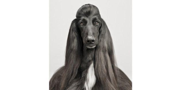 PHOTOS. Pablo Axpe, des portraits de chiens pour dénoncer la marchandisation des