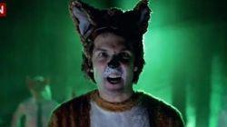 Quel cri fait le renard ? Le clip viral de la