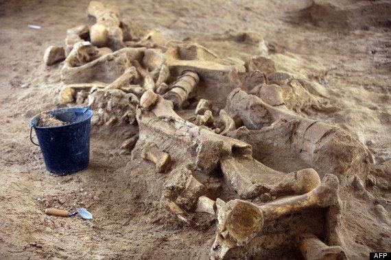 PHOTOS. Le squelette d'un mammouth découvert en