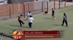 VIDÉO. Un chien marque un but dans un match de foot à