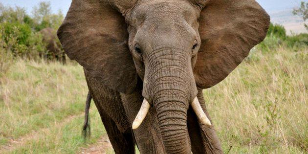 Mort d'un coup de trompe d'éléphant en