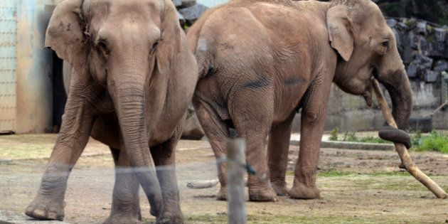 Baby et Népal: le Conseil d'Etat suspend l'arrêté d'abattage des éléphantes, Brigitte Bardot