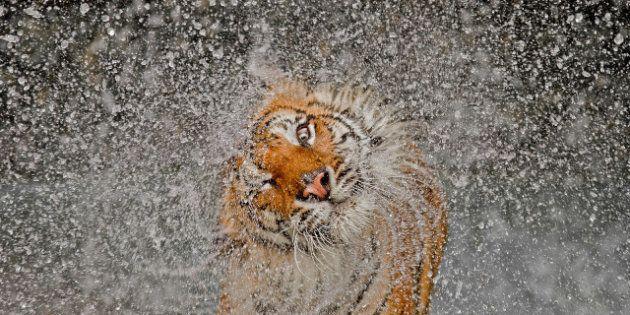 PHOTOS. Les gagnants du concours photo de National Geographic