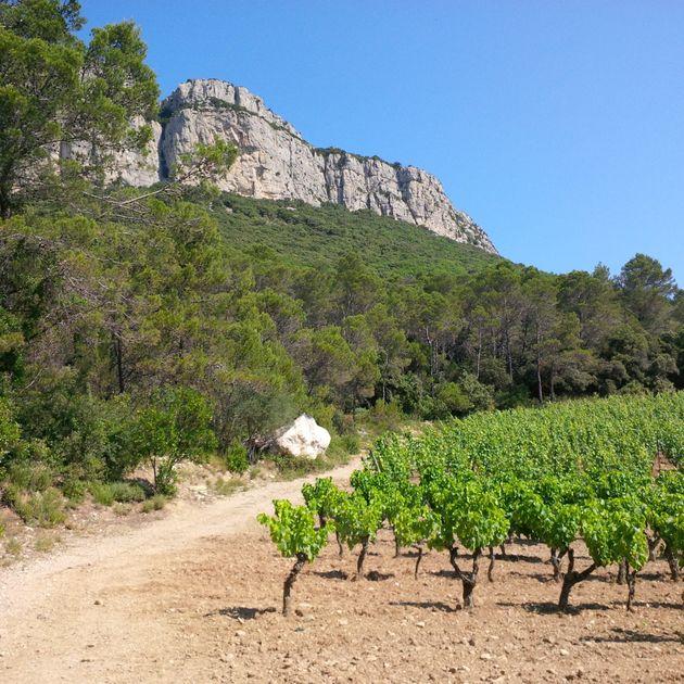 Verrines aux fruits d'été: le vin qui va