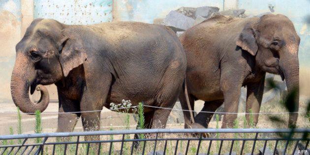 Les éléphantes Baby et Népal sont arrivées sur la Côte d'Azur chez les Grimaldi, recueillies par Stéphanie...