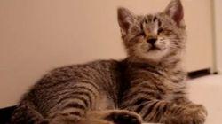Oskar, le chaton aveugle,