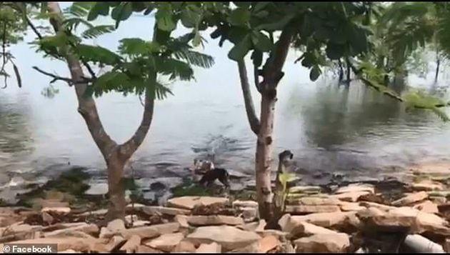 Κροκόδειλος άρπαξε σκύλο που έπαιζε σε όχθη