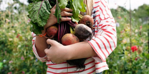 Girl holding bunch of freshly picked beetroot on her