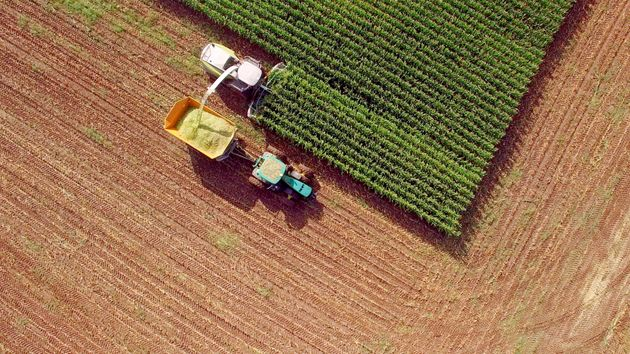 Farm machines harvesting corn for feed or ethanol. The entire corn plant is used in this method, no