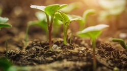 Agriculture biologique: La Tunisie sera parmi les pays pionniers dans le