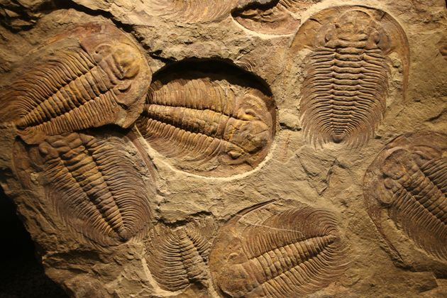 Πάνω από 50 άγνωστα πλάσματα σε ανακάλυψη «θησαυρού» απολιθωμάτων στην