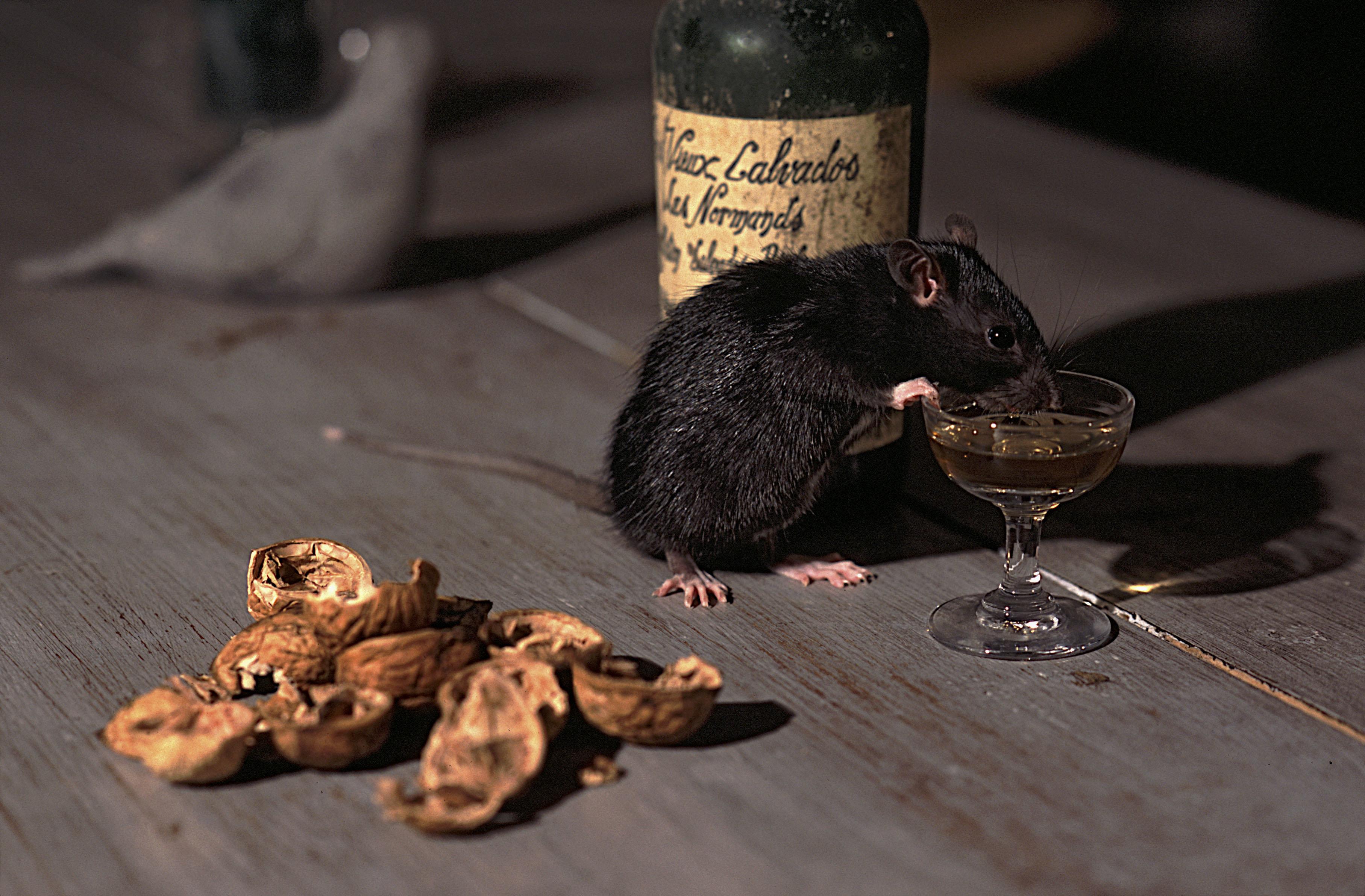 Επανάσταση: Ερευνητές θεράπευσαν τον αλκοολισμό σε