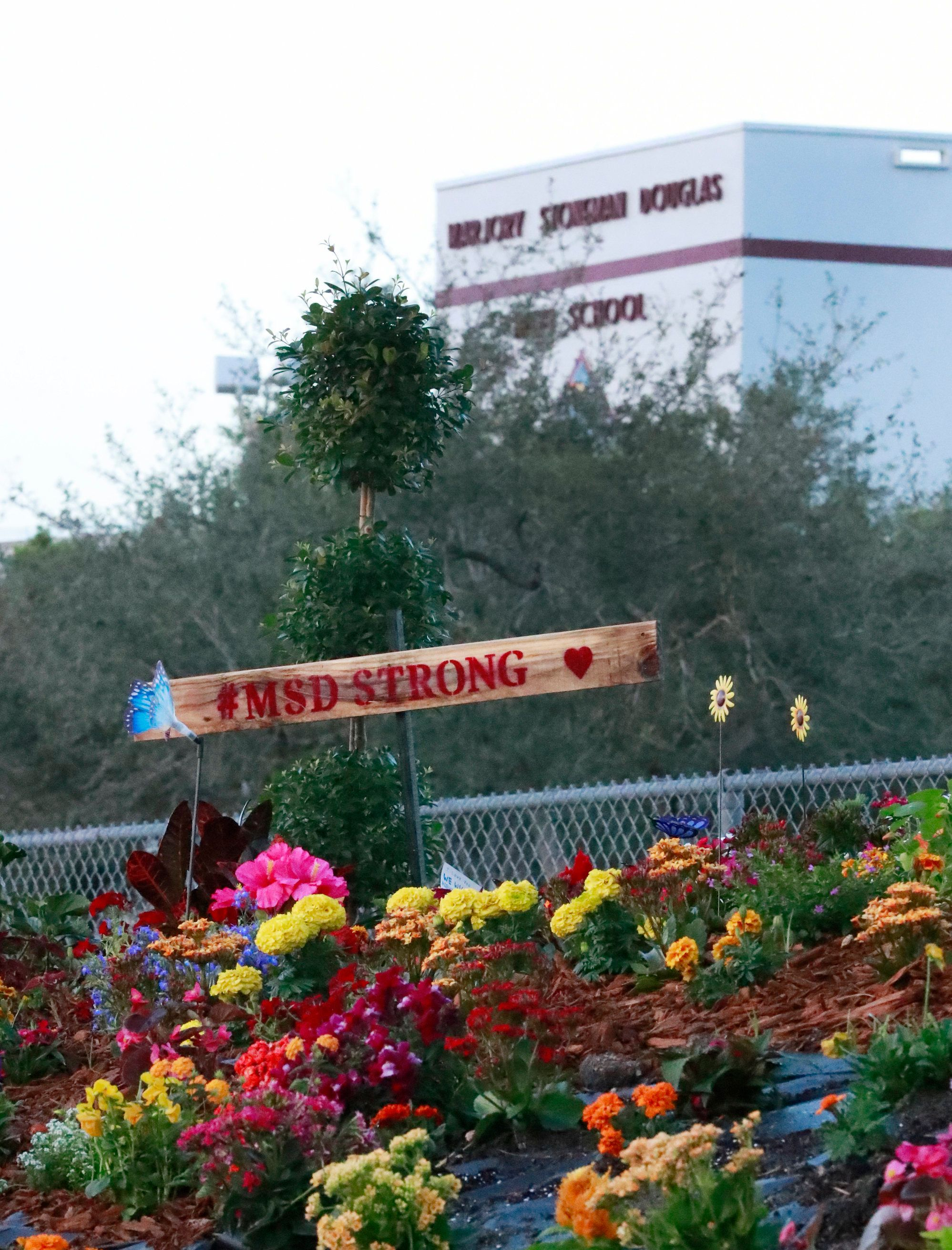An MSD Strong sign is shown in a memorial garden outside Marjory Stoneman Douglas High School during the one-year anniversary of the school shooting, Thursday, Feb. 14, 2019, in Parkland, Fla. A year ago on Thursday, 14 students and three staff members were killed when a gunman opened fire at the high school.  (AP Photo/Wilfredo Lee)