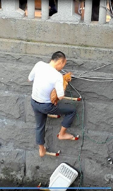 はしごで震える猫、男性が颯爽と助ける