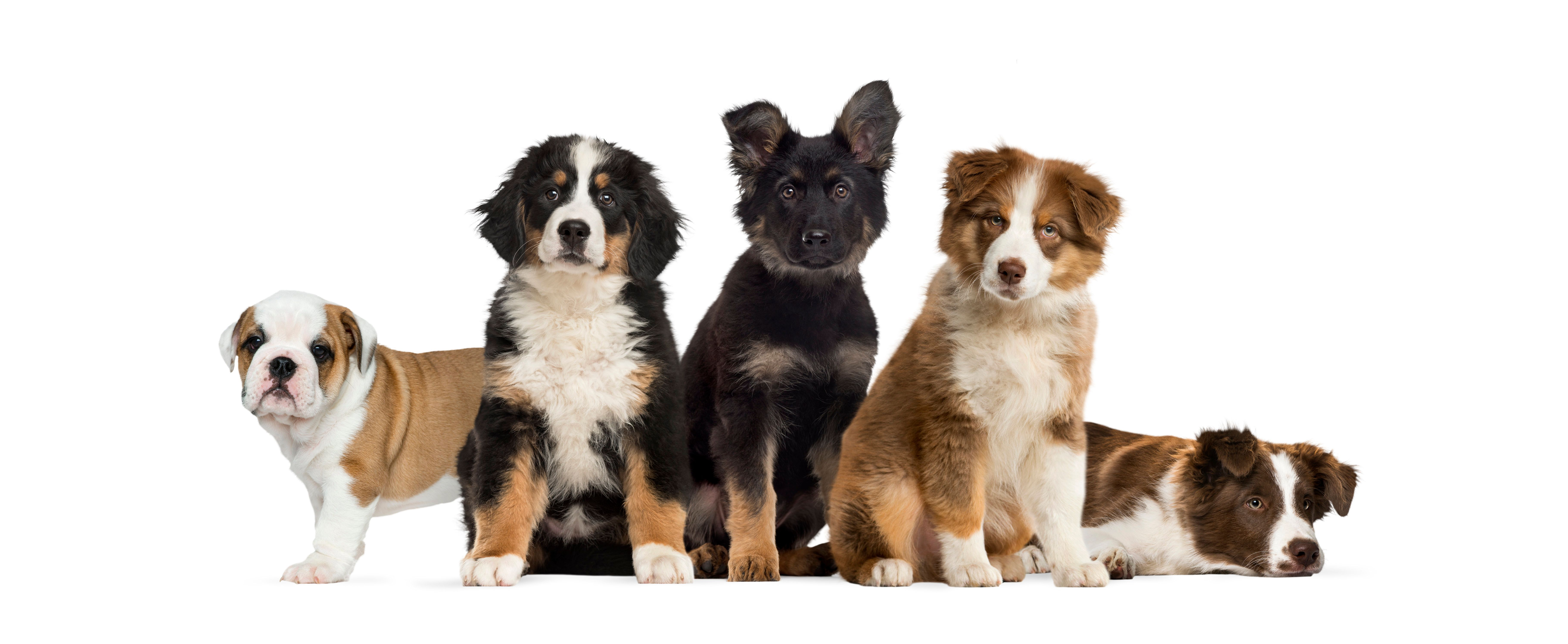It's National Puppy Day! Here's What You Need To Know About Those Oh-So-Cute