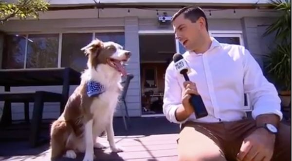 Dog Has Perfect Response When Reporter Asks How He Copes With Fame