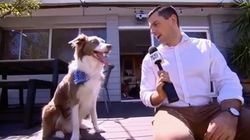 Dog Has Perfect Response When Reporter Asks How He Copes With