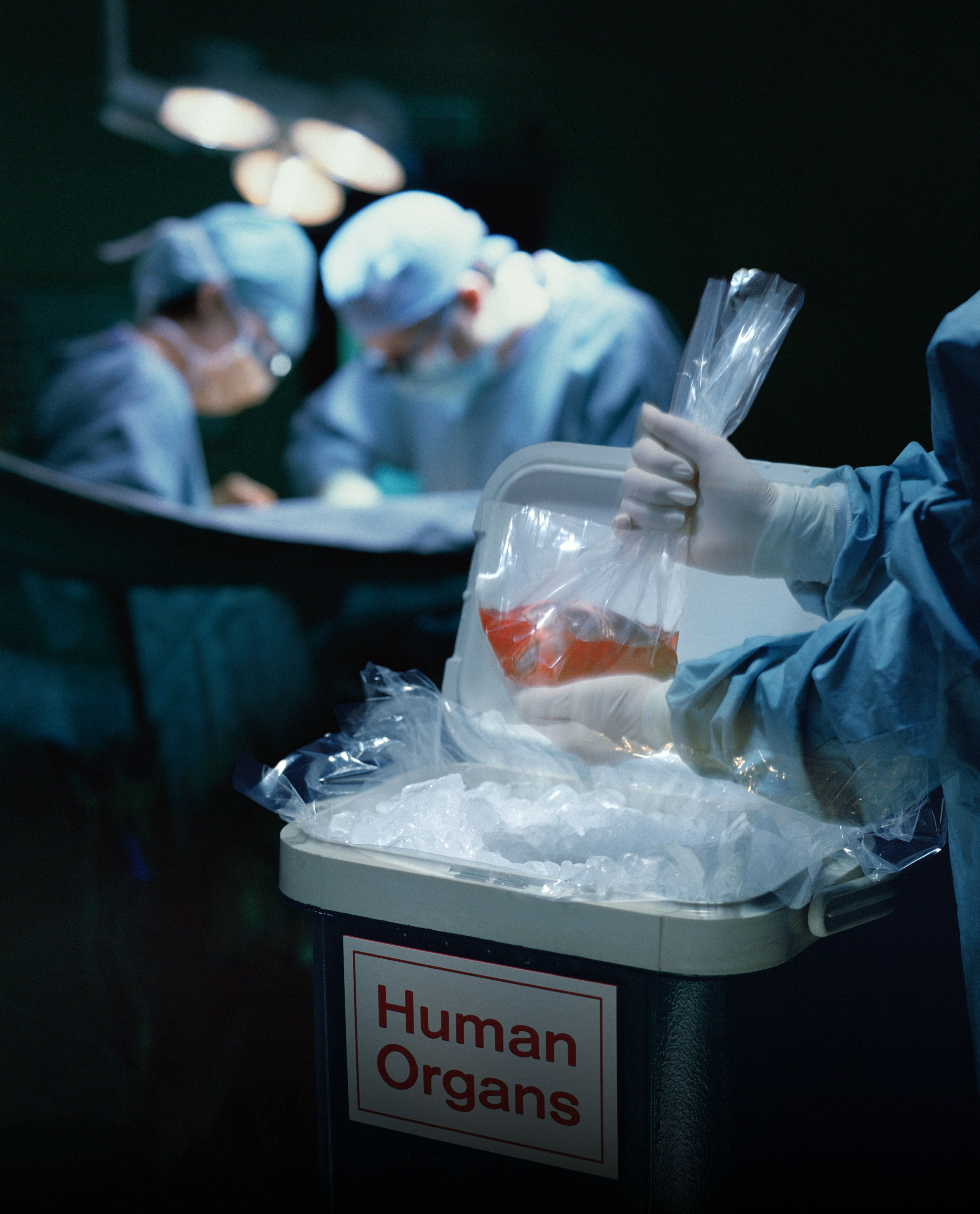 Tunisie- Greffe rénale: Plus de 1300 patients