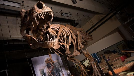 «Scotty», ο μεγαλύτερος τυραννόσαυρος που έχει βρεθεί