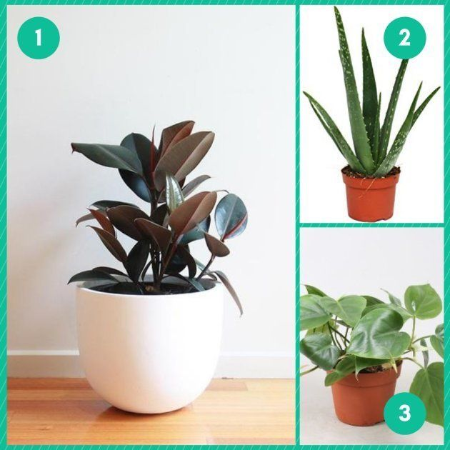 Une plante pour son
