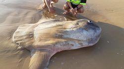 Mais quelle est cette étrange créature échouée sur une plage