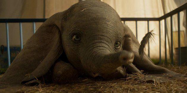 Certains éléments de l'histoire du petit Dumbo ont été modifiés pour les besoins de cette adaptation...