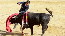 ¿En qué se diferencia un toro de una compresa? En la plaza de Ávila lo tienen