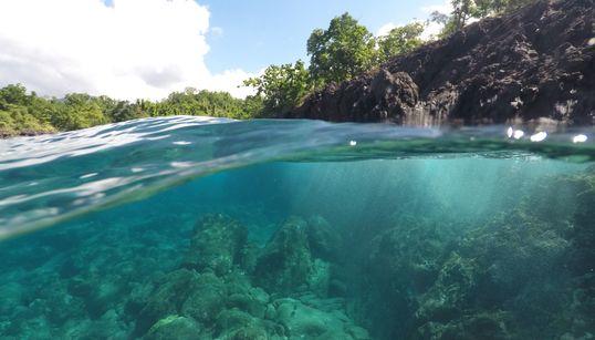 5 einfache Dinge, die jeder tun kann, um die Ozeane zu