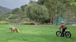 Arnold Schwarzenegger Bikes After Mini Pony In Weirdly Soothing Viral 'Fitness'