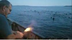 El vídeo de un pescador lanzando explosivos a un grupo de leones marinos que indigna en