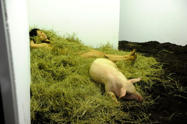 Art Basel Miami 2011: Miru Kim's 'The Pig That Therefore I Am' Exhibit (EXPLICIT