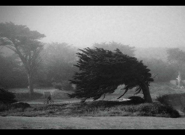 """Into the Wind,"" Deb Evans Braun"