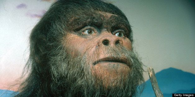 Paranthropus robustus. A model of the early hominid Paranthropus robustus. P. robustus means 'robust equal of man' and the na